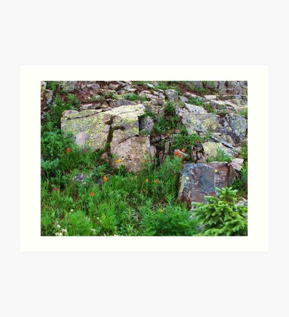 Yankee Boy Basin Wildflowers Art Print