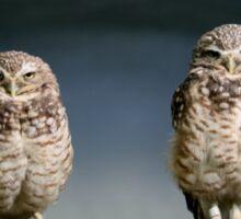 BURROWING OWLS Sticker