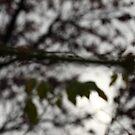 the tangle of a rainy day... by byzantinehalo