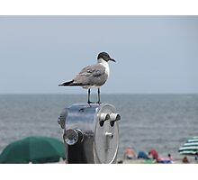 birds I view Photographic Print