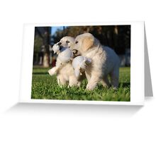 Baby Golden Retrievers at Play Greeting Card
