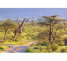 Giraffe in the Savannah Photographic Print