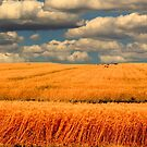 Bread Basket of the World by Larry Trupp