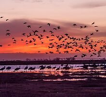 Sunrise at San Luis Valley and thousands of Cranes by algill