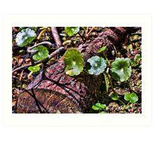 Swamp Undergrowth Art Print