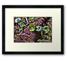 Swamp Undergrowth Framed Print