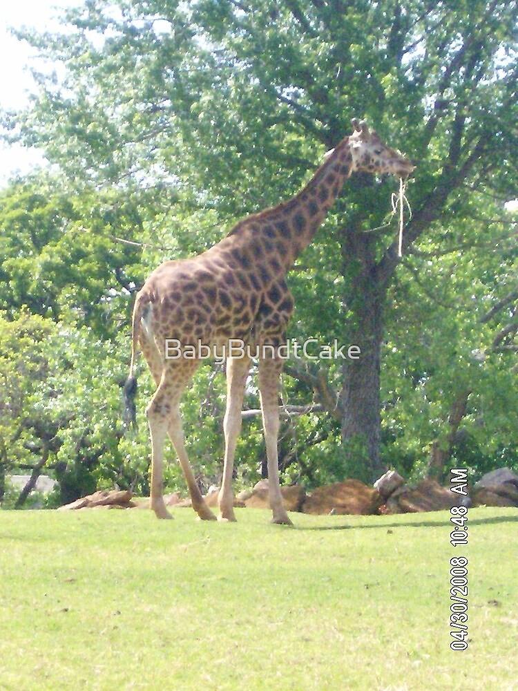 OKC Zoo Giraffe by BabyBundtCake