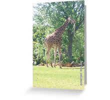 OKC Zoo Giraffe Greeting Card