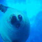 Playful Seal by JenniferJW