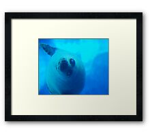 Playful Seal Framed Print
