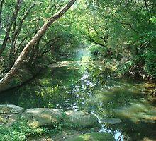 Dirty green south - Creek, Atlanta, Georgia by deathbybbq