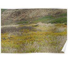 Cabrillo National Park, California Poster