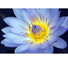 Feeling Blue - macro waterlilly Photographic Print