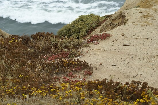 Cabrillo National Park, California by Tara Burkhardt