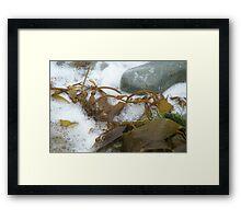 Cabrillo National Park, California Framed Print