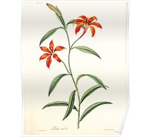 Floral illustrations of the seasons Margarate Lace Roscoe 1829 0272 Lilium Concolor Poster