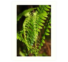 Fern and fancy free Art Print