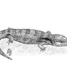 Bluetongue lizard by Laura Grogan