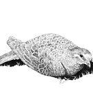 Common Bronzewing by Laura Grogan