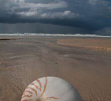 Shellscape by JSumpton