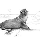 Australian seal by Laura Grogan