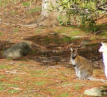 """white """"boomer"""" and mates by gaylene"""