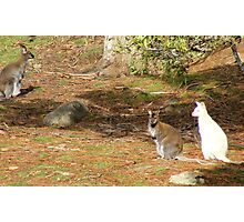 "white ""boomer"" and mates Photographic Print"