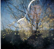 Darcy by JordanLeeChappe