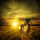 Sunrises & Quarter Horses by Laura Palazzolo