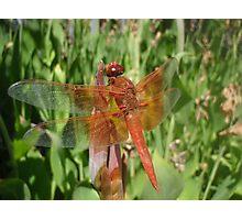 """Retro Dragonfly"" Photographic Print"