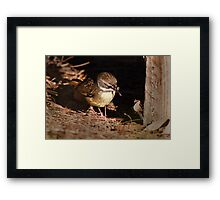 Its small but tasty Framed Print