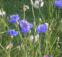 meadow flowers by andreajansen