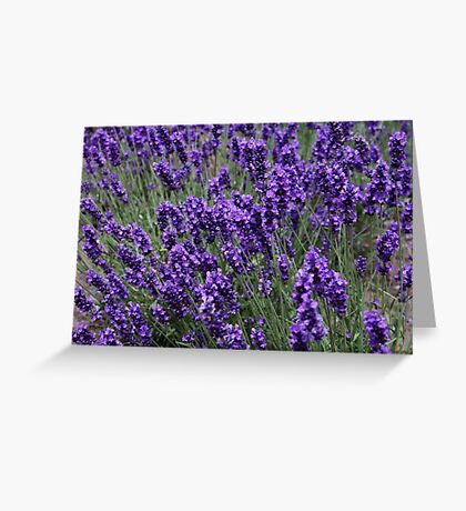 Lavender on a Windy Day Greeting Card