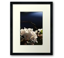 """""""Rhododendron"""" Framed Print"""