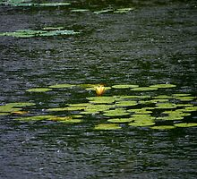 Rain on the pond by Brent McMurry