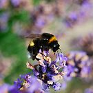 Drinking Lavender by Rowan  Lewgalon