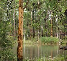 Trees at Timbertown by 2HPhotography