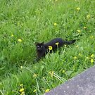 York kitty by BronReid