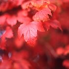 Autumn Leaves by Derwent-01