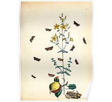 British moths and their transformations Henry Noel Humphreys and John Obadiah Westwood 1845 0221 Poster
