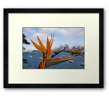 Bird of Paradise (Strelitzia) - Sydney Harbour - Australia Framed Print