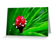 Tropical Flower Surrounded by Green Greeting Card