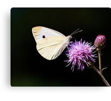 CABBAGE BUTTERFLY - remake Canvas Print