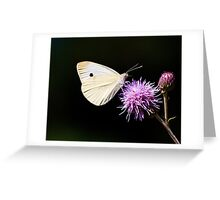 CABBAGE BUTTERFLY - remake Greeting Card