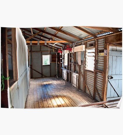 Country Shearing Shed Poster