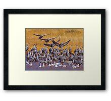 Sandhill Cranes & Snow Geese Framed Print