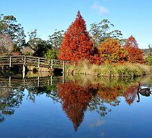 Arboretum pond - Launceston by Ken Jones