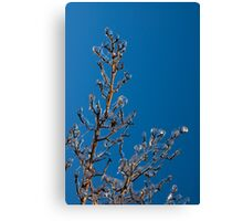Mother Nature's Christmas Decorations - Gleaming Icy Baubles in Blue Canvas Print