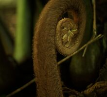 Frond - Mt Coot-tha Botanic Gardens  by Matthew Brown