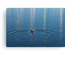 Ripples and Circles – Red-Necked Grebe Canvas Print